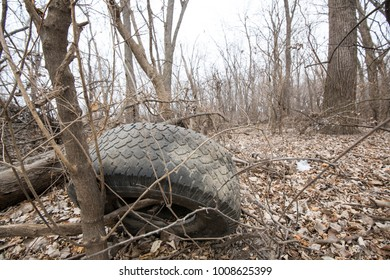 An abandoned tire rests against a small tree in the woods