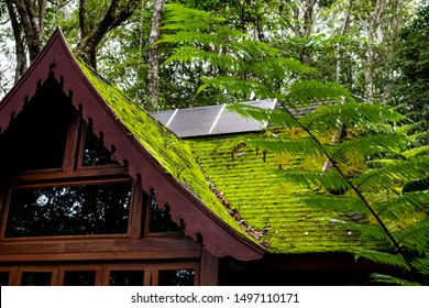 An abandoned wooden building with roof shingles covered with green moss located under big trees. A fern tree on the right.