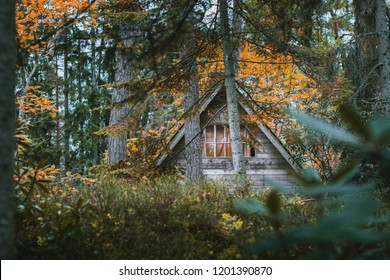 Abandoned wooden house in woods surrounded by plants. Cabin hidden beneath pine trees in moody autumn colors. Roof covered in moss.