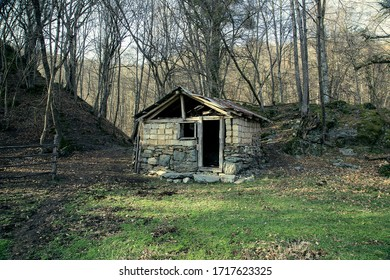 abandoned wooden shed in forest