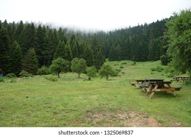 Abant forest in Turkey