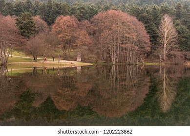Abant lake dry trees and pine trees with a reflection on the lake.