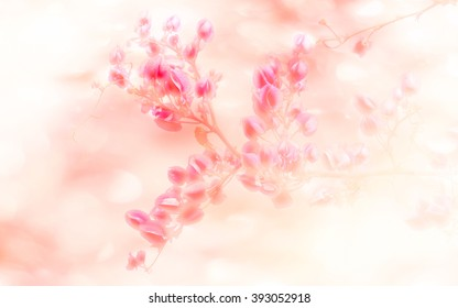 Abatract.Sweet color pink flowers in bokeh texture soft blur for background.