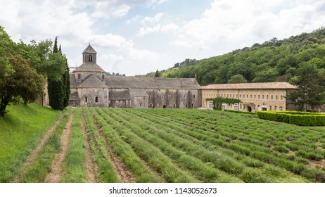 Abbaye de Senanque with green lavender in Provence, France