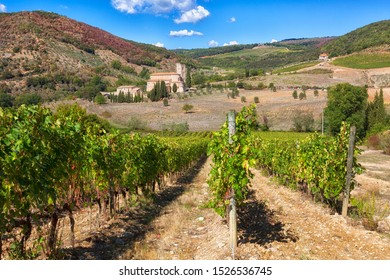 Abbey of Sant'Antimoand vineyards , Montalcino, Tuscany, Italy