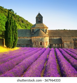 Abbey of Senanque and blooming rows lavender flowers on sunset. Gordes, Luberon, Vaucluse, Provence, France, Europe.