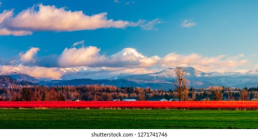 Abbotsford, British Columbia, Canada - December 30, 2018: Mt Baker keeps watch over the fields of Abbotsford, British Columbia