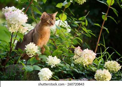 Abi cat in the flowers