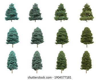 Abies concolor trees on white background. Colorado white fir isolate collection season. 3D illustration with Clipping path