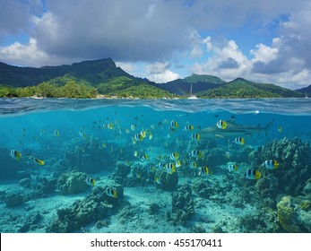 Above and below sea surface, the coast of Huahine island and coral reef fish school with a shark underwater, Pacific ocean, French Polynesia