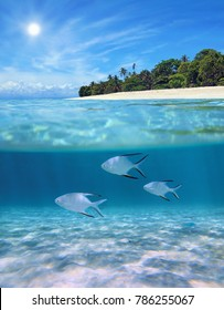 Above and below sea surface near tropical island beach with Palometa fish underwater swimming over sandy seabed, Caribbean, Panama
