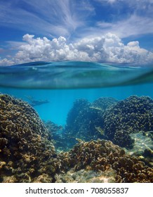 Above and below surface of the Caribbean sea with coral reef underwater and a cloudy blue sky