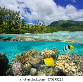 Above and below water surface in the lagoon of Huahine near lush shore with corals and tropical fish underwater split by waterline, Pacific ocean, French Polynesia