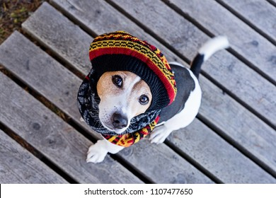 Above portrait of cute jack russell dog wearing in knitted beret and scarf sitting on the wooden boardwalk, looking at camera. Season change and care of dog health in the cold season walking concept
