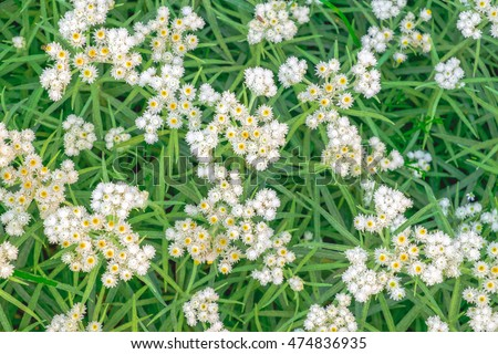 Above pretty white flowers growing on stock photo edit now above pretty white flowers growing on a rural meadow blooming flowers on a green grass mightylinksfo