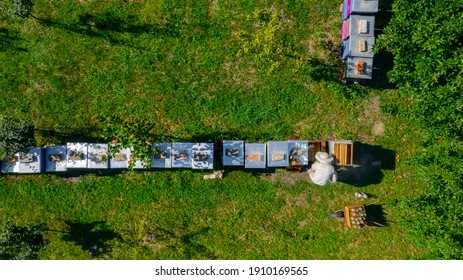 Above top down view, beekeeper is controlling situation in lined wooden colorful beehives, bee colony arranged in a row, line.