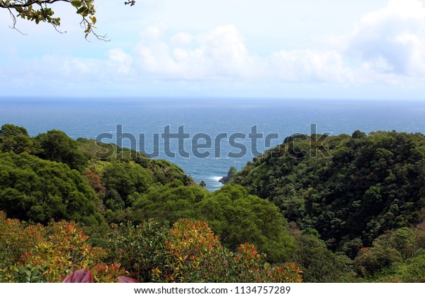Above the trees of a rainforest looking out to the Pacific Ocean in Haiku, Maui, Hawaii, USA