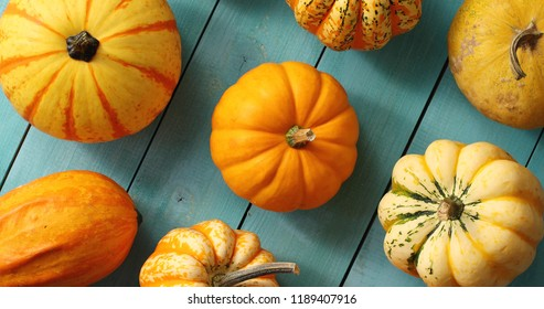 From above view of ripe orange pumpkins placed in rows on blue wooden background
