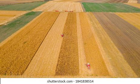 Oben bei zwei, landwirtschaftliche Erntemaschinen, da sie reife Mais schneiden und ernten auf landwirtschaftlichen Feldern, Mais.