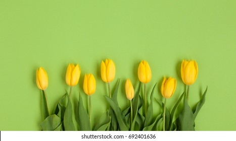 From above view of yellow tulips arranged in row on green background.