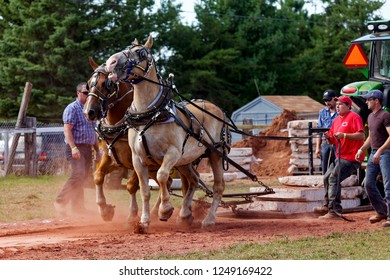 ABRAMS VILLAGE, PRINCE EDWARD ISLAND, CANADA - SEPT 1, 2012: The horse pull competition at  the Evangeline Agricultural Exhibition and Acadian Festival in Prince Edward Island, Canada.