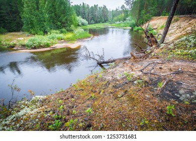 Abrupt coast with indistinct roots of trees and current river in northern taiga of wood