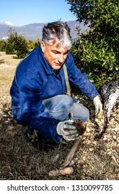 Abruzzo/Italy- 11/24/2014: Foraging for black truffles in Abruzzo, Italy