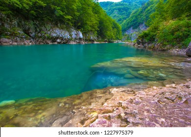 Absolutely transparent turquoise cold water of a mountain rapid deep river from a rocky shore, background of summer green trees of the forest. Tara River Canyon, Durmitor National Park, Montenegro.