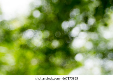 Abstact real nature green blurred background with bokeh,Abstact defocus bokeh light background made of forest style.