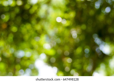 abstarct  bokeh ligt background made of forest style