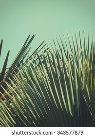 Abstrac etxotic background. Palm leaves in sunlight. Retro toned.