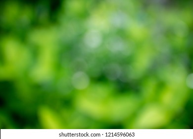 abstrac natural green blurred soft bokeh background.