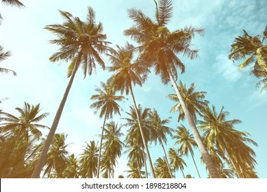 Abstracr of  palm trees background  with texture frame image