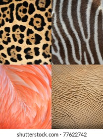 abstract africa animal pattern texture of skin, fur and feathers.. Tiles show elephant skin, leopard fur, flamingo feathers and zebra pattern as background.