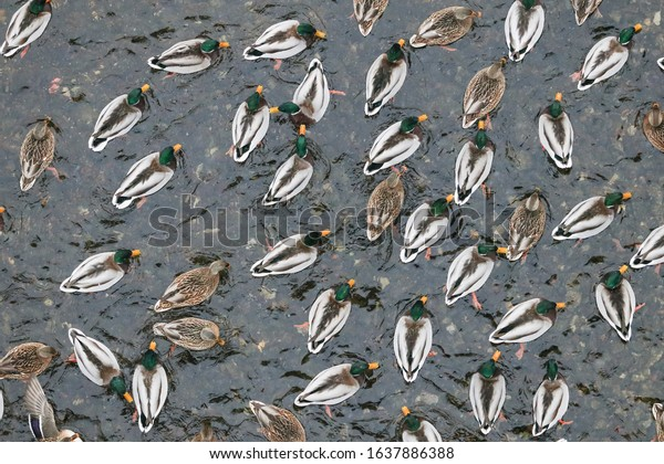 abstract-animal-background-large-cluster