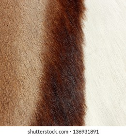 abstract animal hair background in three colors