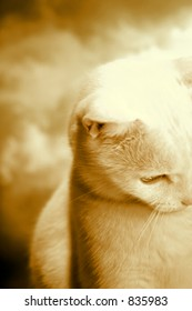 Abstract Art, Kitty in Sepia Tone.