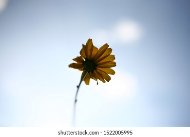 Abstract art and nature. Beautiful flower with yellow petals on a thin stalk blurred focus. What do the flowers see when they grow. Blue sky and white clouds without focus. Natural background