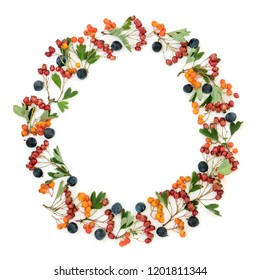 Abstract autumn berry wreath with blackthorn, hawthorn and rowan berries on white background with copy space.
