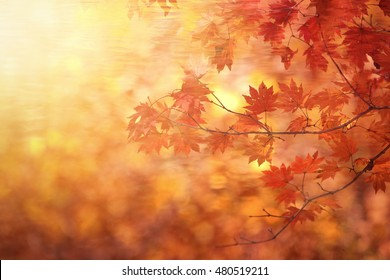 Abstract autumn forest blur background