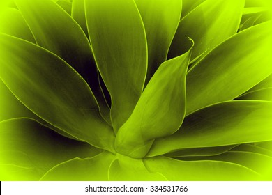 Abstract background in Agave leaves style