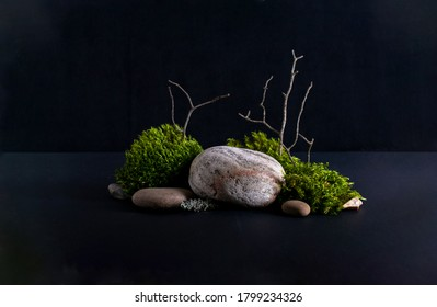 Abstract background with bark tree, moss stone podiums for products presentation or exhibitions.  Concept for natural eco organic bio cosmetic beauty product  with copy space