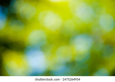 abstract background of blur green leaves