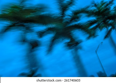 Abstract background blur palm leaves in motion during tropical hurricane   Stormy weather motion blur palm trees against blue sky during Florida hurricane for blog magazine poster book cover