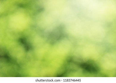 Abstract background blurred green color soft light.