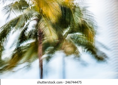 Abstract background with blurred palm leaves in motion during hurricane  Blurred abstract background with closeup of green palm leaves in motion during Florida hurricane