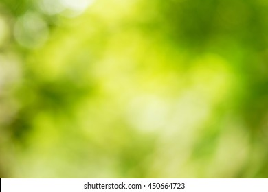abstract background blurry image of natural forest booked background.