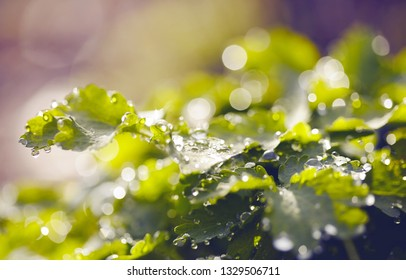 Abstract background with bokeh with a green grass in dew.