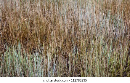 Abstract Background of Brown Grass