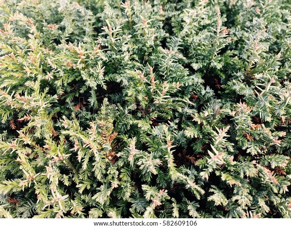 Abstract background of bush